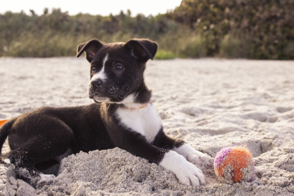 Healthy activities to do with your pup this Spring/Summer!
