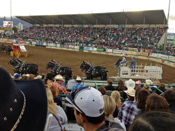 Ever been to a rodeo?