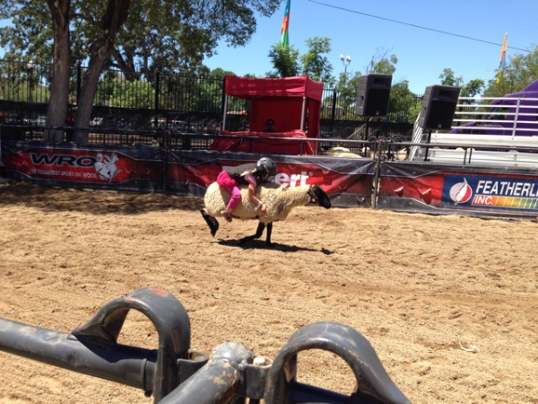 Ever heard of mutton busting?