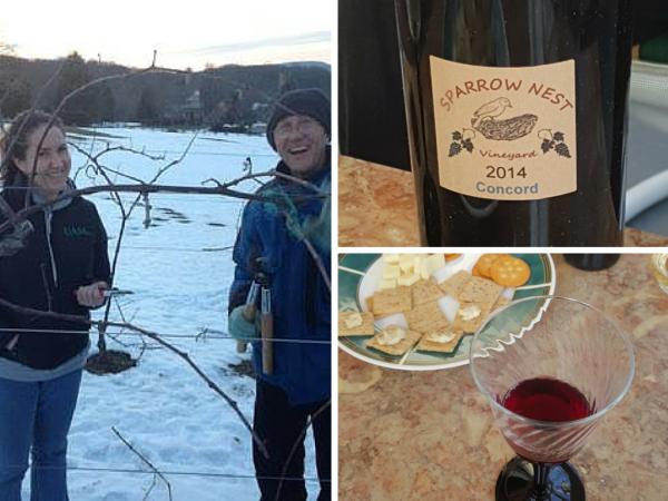Craigslist, Concord Wine and 180 grape plants