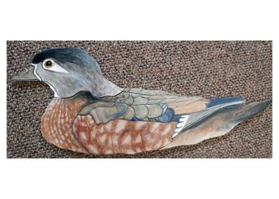 wood duck,