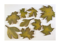 leaf tile, back splash, backsplash, Sugar Maple, Silver Maple, Red Maple, Sassafras, hearth, Oak, Ginkgo, interior design, art tile, doorbells, pool, leaves, tile, ceramic, stoneware, stoneleaf, stoneleaf tile, stoneleaftileGingko,
