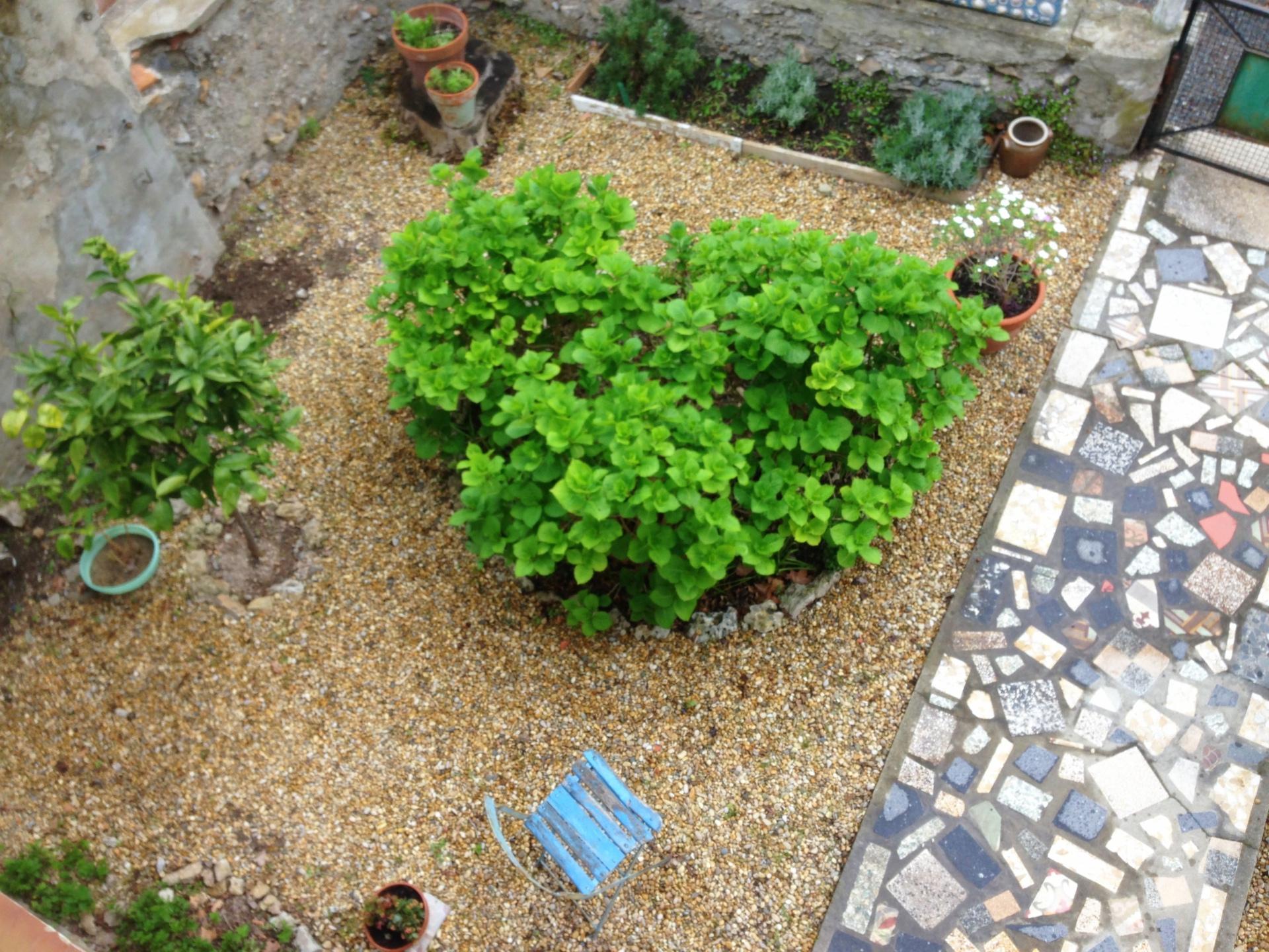 Hortensias/Hydrangeas Stage 1