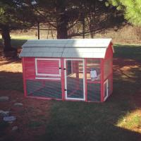 Top Ten Things I've Learned Raising Chickens
