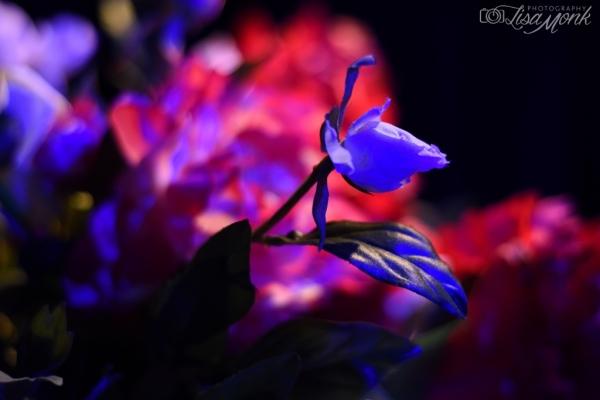 Lisa Monk Photography
