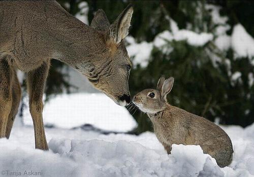 deer and rabbit resistant plants