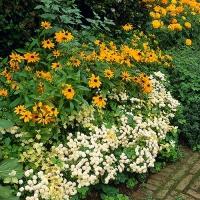 sun garden plan
