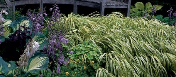 shade garden plan