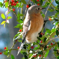 Come One, Come All: Small Trees &  Shrubs to attract birds and butterflies