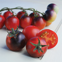 Cherry Tomato-Indigo Cherry Drops (photo courtesy of Totally Tomato)