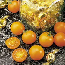 Cherry Tomato-Sun sugar (photo courtesy of Totally Tomato)