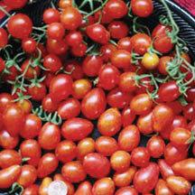 Grape Cabernet