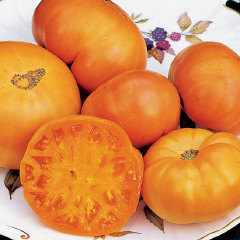 Heirloom Amana Orange