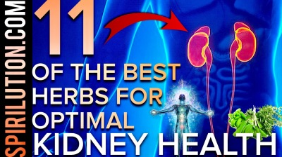 11 OF THE BEST HERBS FOR OPTIMAL KIDNEY HEALTH, FUNCTION, BALANCE & KIDNEY STONES