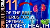 11 OF THE BEST HERBS FOR OPTIMAL KIDNEY HEALTH, FUNCTION, BALANCE & KIDNEY STONES