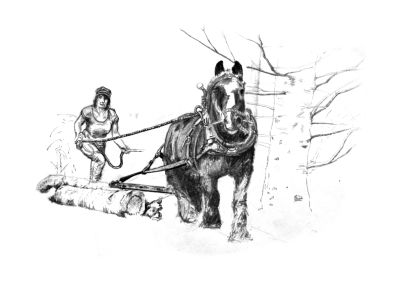 Horse Logging Pencil Drawing