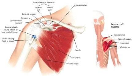 """<img alt=""""shoulder pain"""">"""