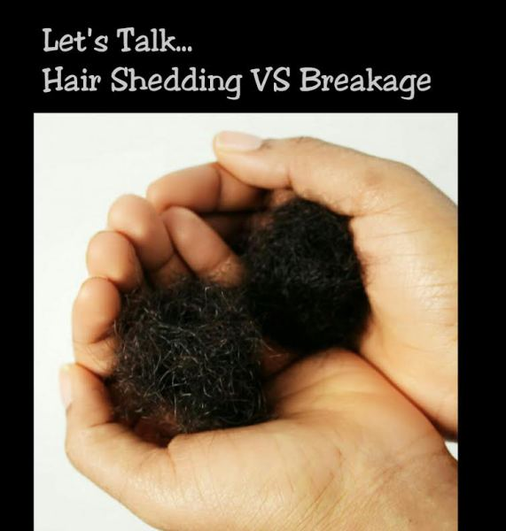 Lets Talk.... Hair Shedding VS Breakage