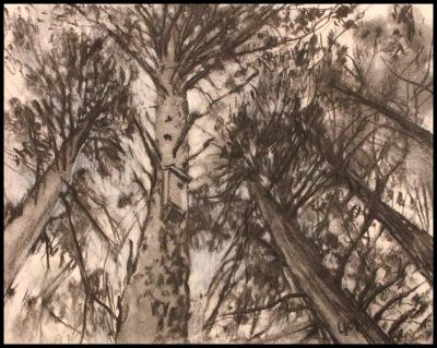 BIRD HOUSE - 8X10 - CHARCOAL ON PANEL - 2011