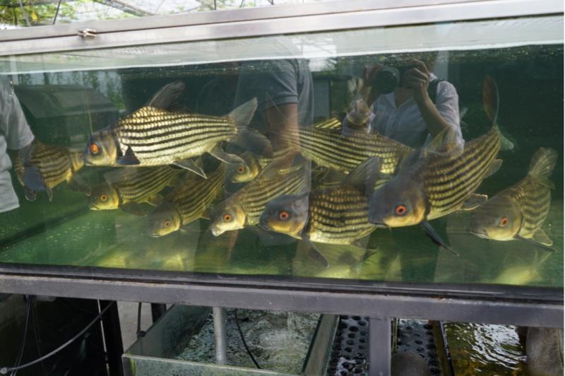 Rooftop Fish Farm