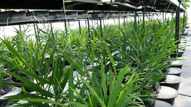 Kuala Lipis Integrated Farm