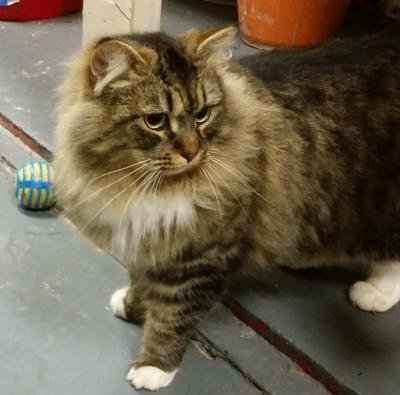 Cat guest, Wilbur