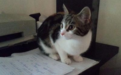 Cat guest, Ada