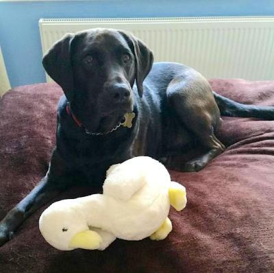 dog grooming oadby discount free
