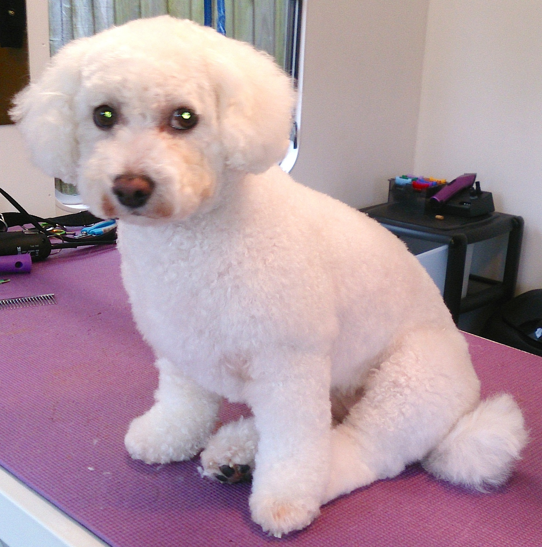 dog grooming leicester oadby