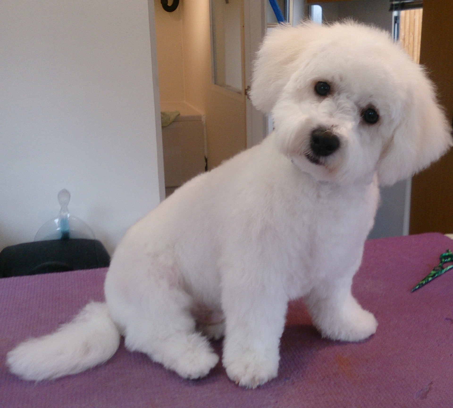 dog grooming oadby leicester