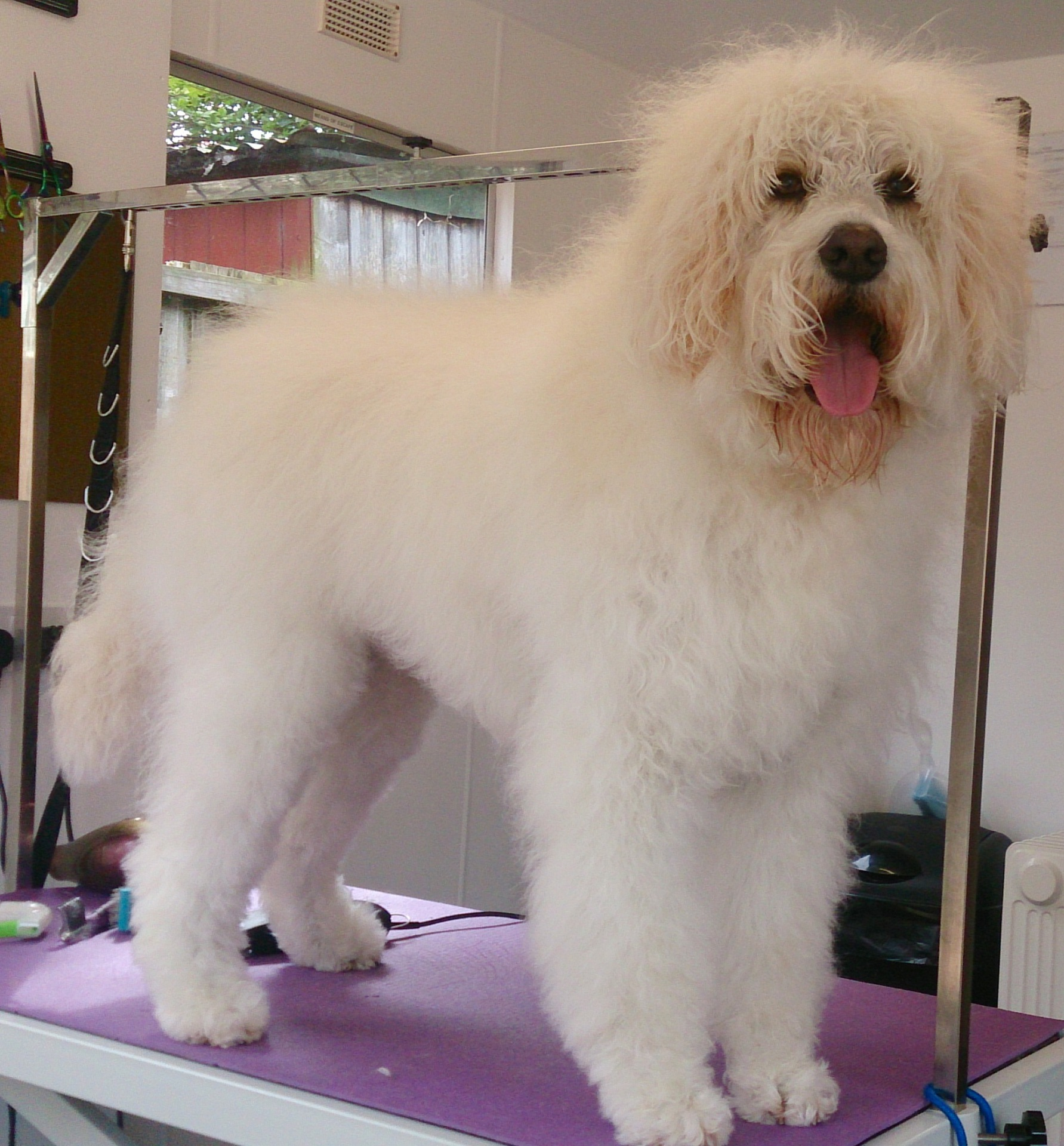 oadby leicester dog grooming