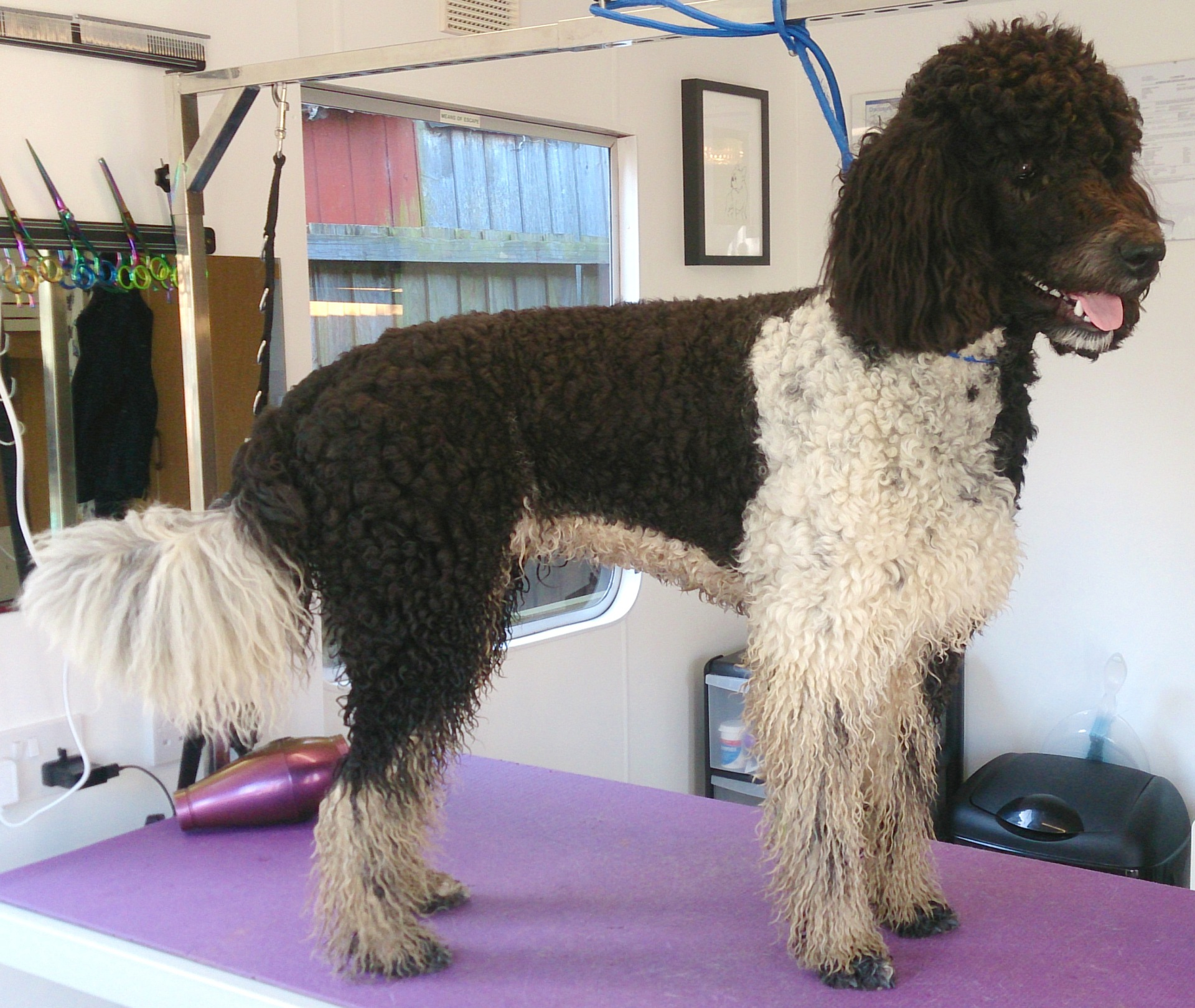 wags oadby leicester dog grooming