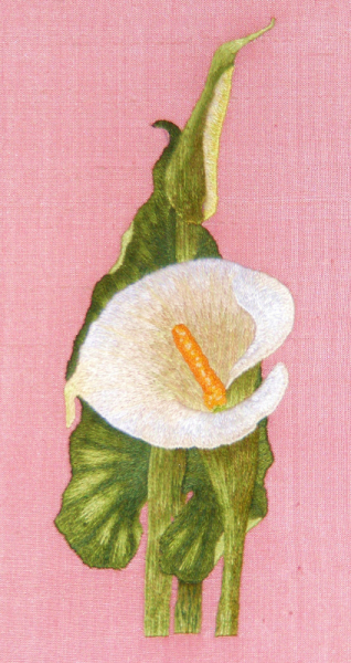 'Arum Lily' in silk shading