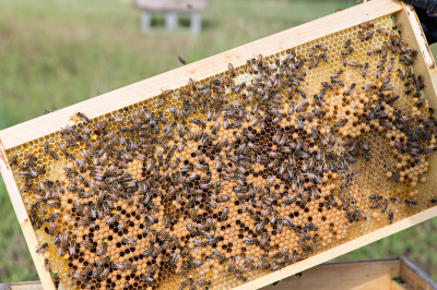 "Government's ""all hands on deck"" plan to save the bees"
