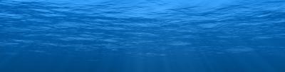 iDfish - A Brief History