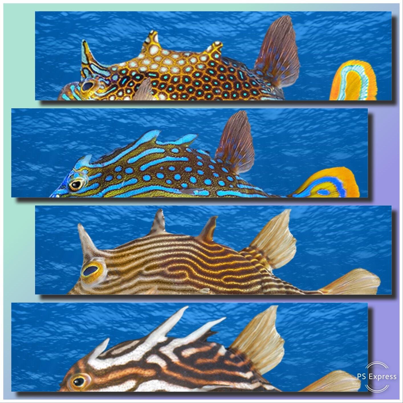 New Fish Addition x 2