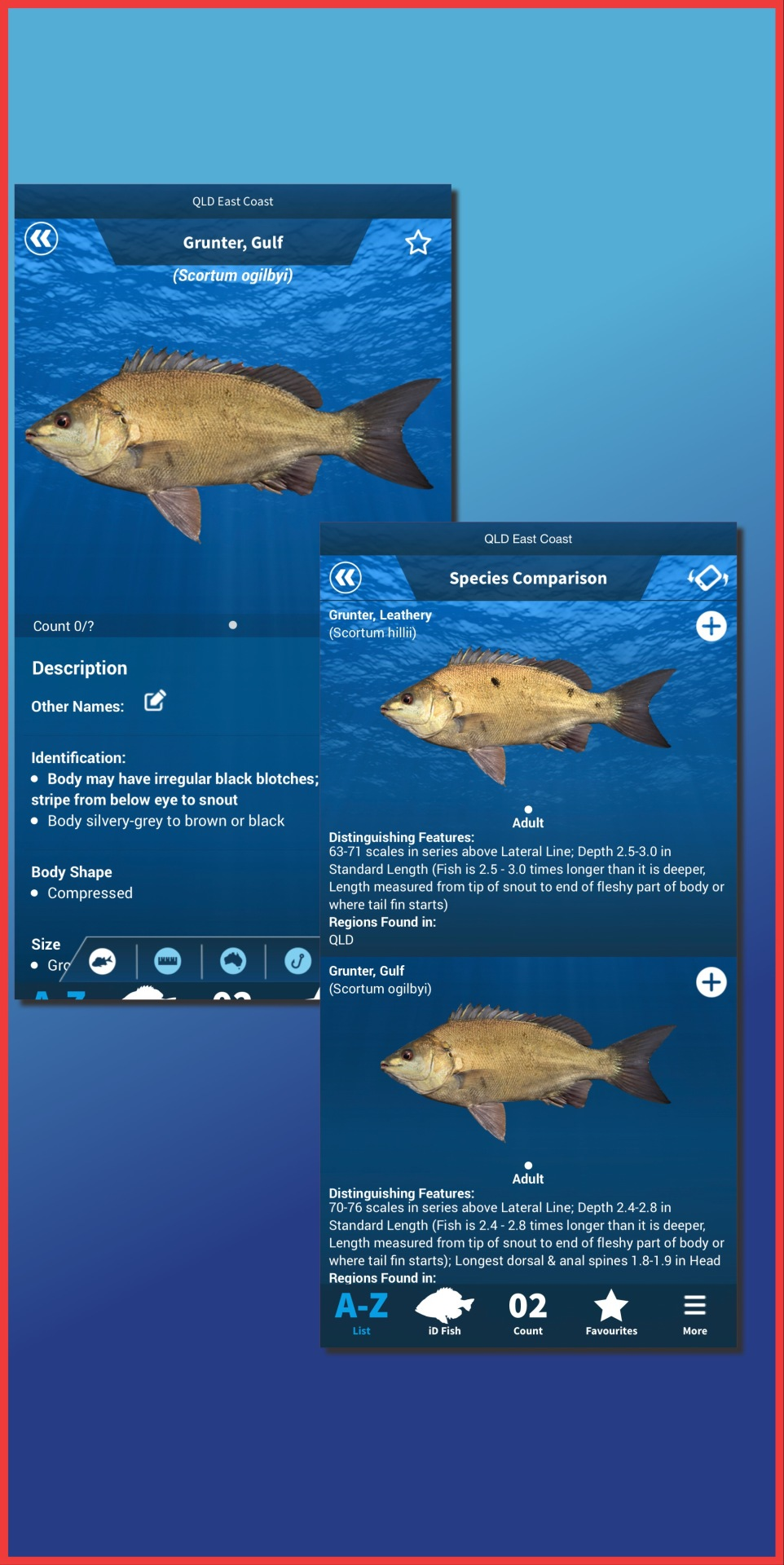 New Fish Added - Gulf Grunter