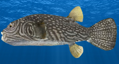 New Fish and Image updates