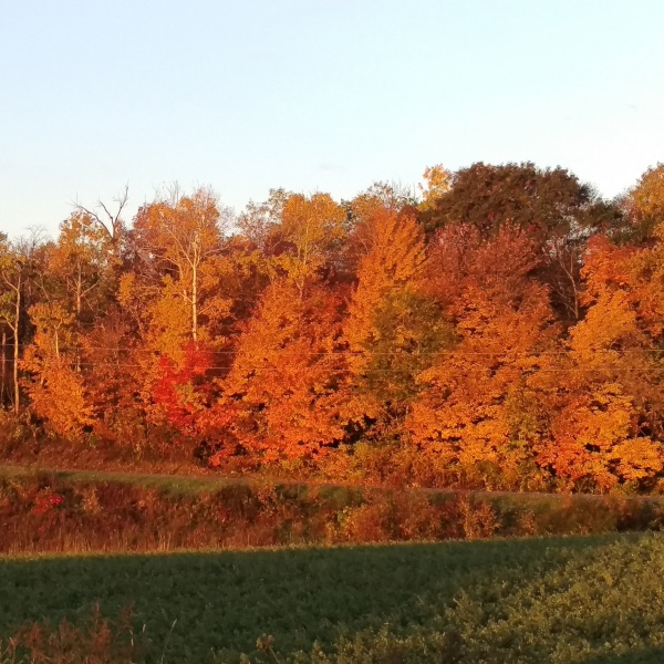 Fall at Croix-View Farm
