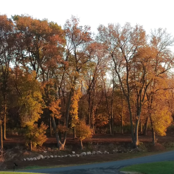 Fall at the ceremony site