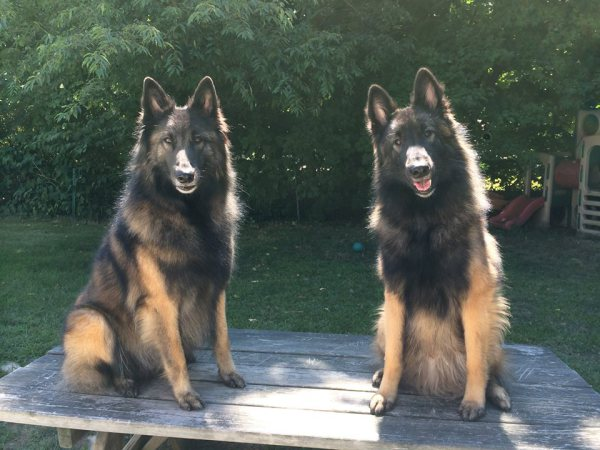 Lisa's pups