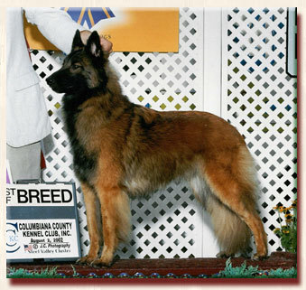 BISS Am/Can CH Havuherd of Timberwind's Star, CGC