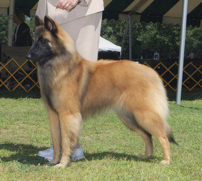 Group Placing GCH Timberwind's Good Day Sunshine, CGC, CA Westminster AOM