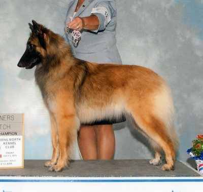 Westminster Select GCH Timberwind's Dancing In The Dark