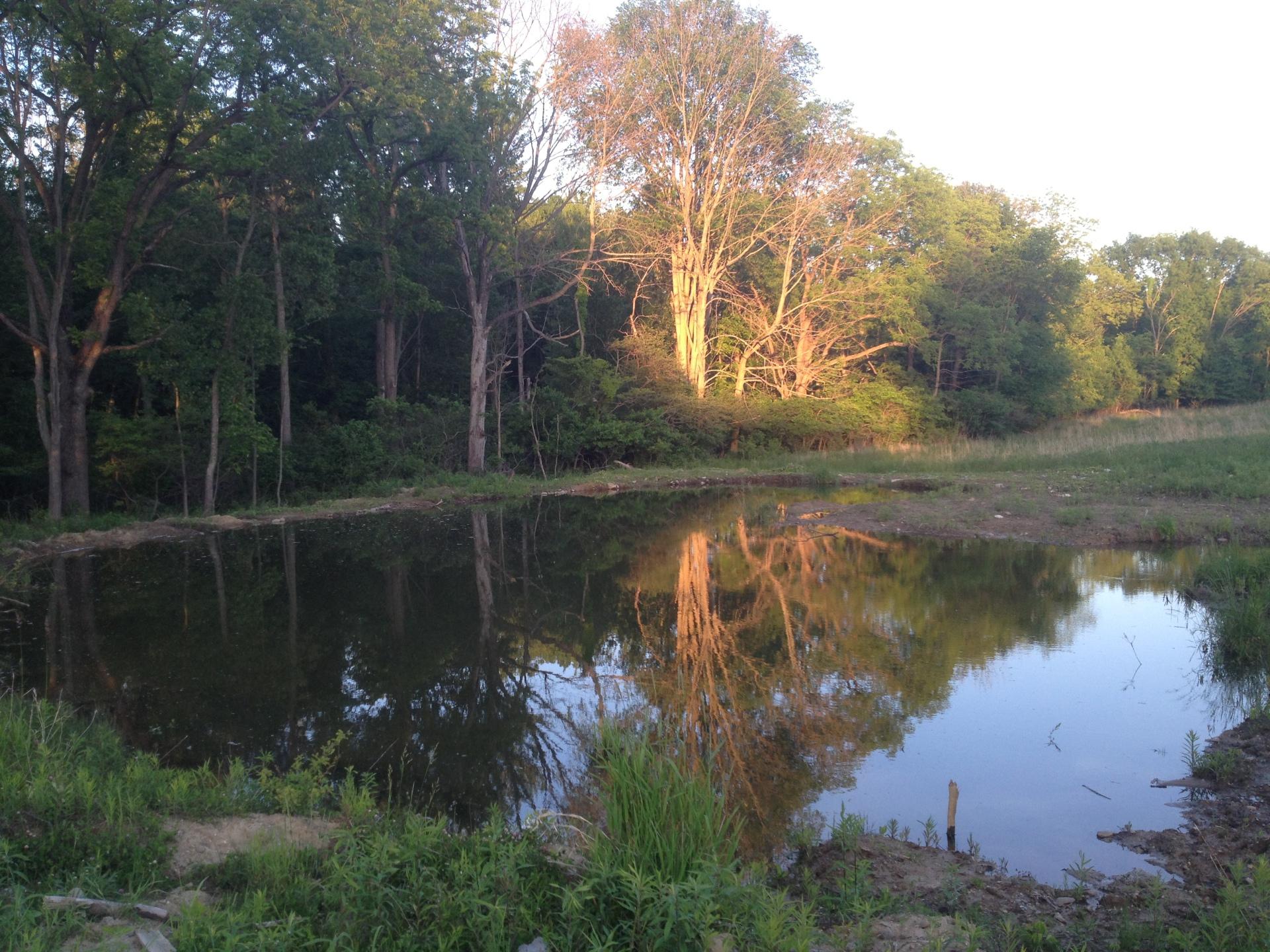 New Pond