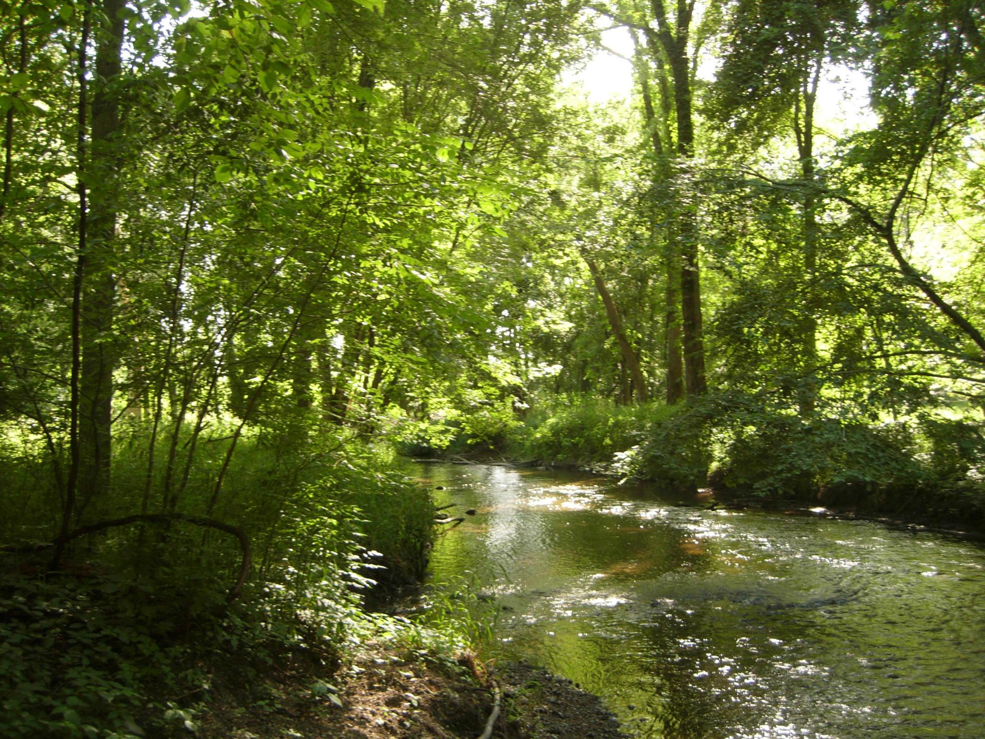 Swan creek