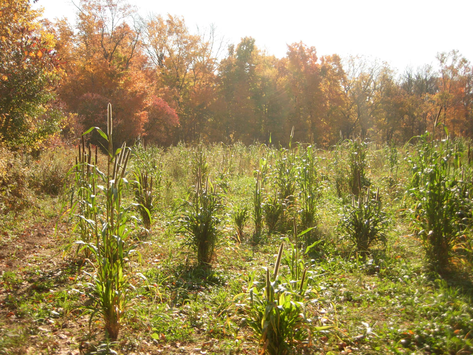 Native grass lands, 70 acre restoration project