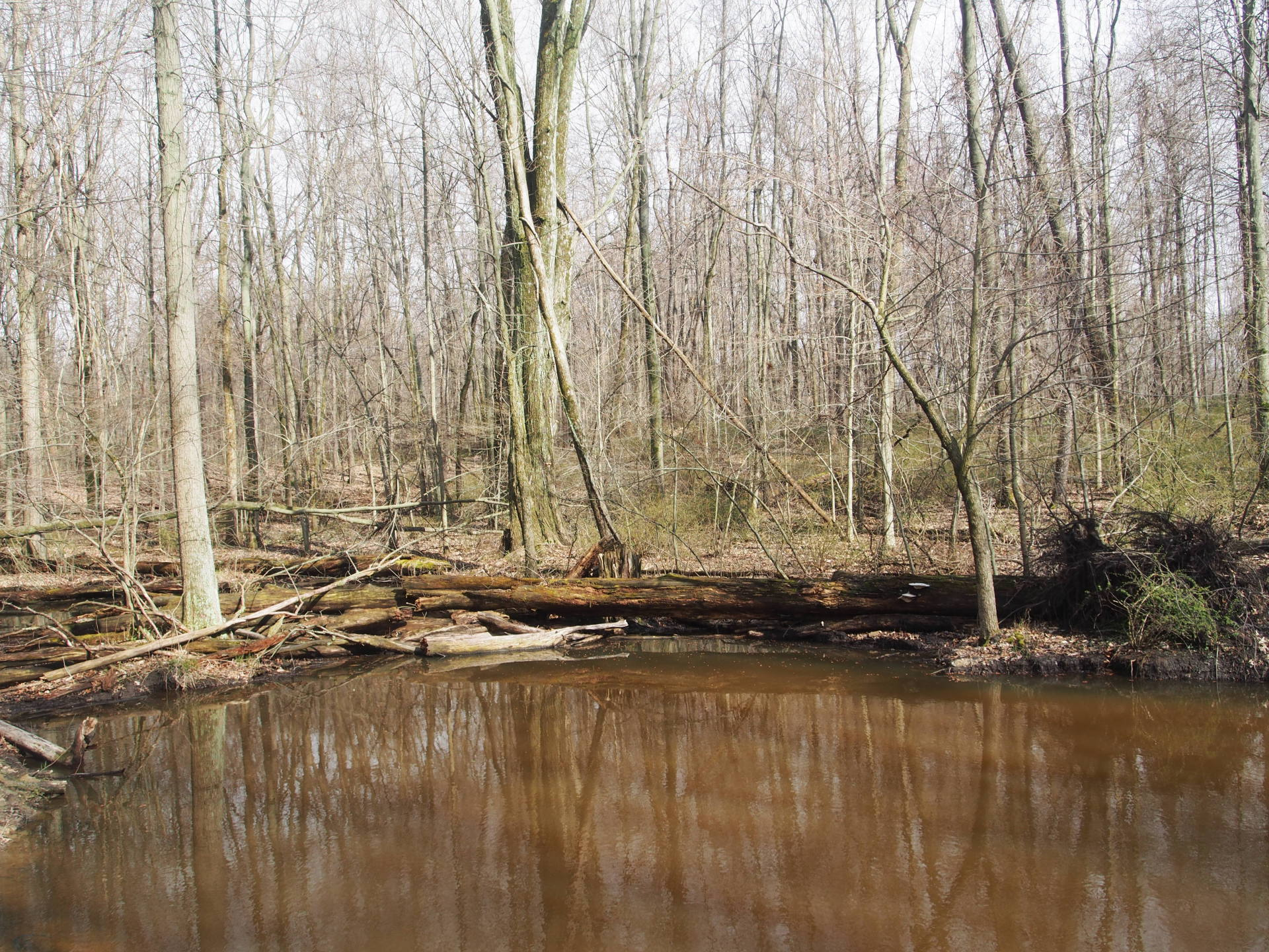 Early spring wetlands