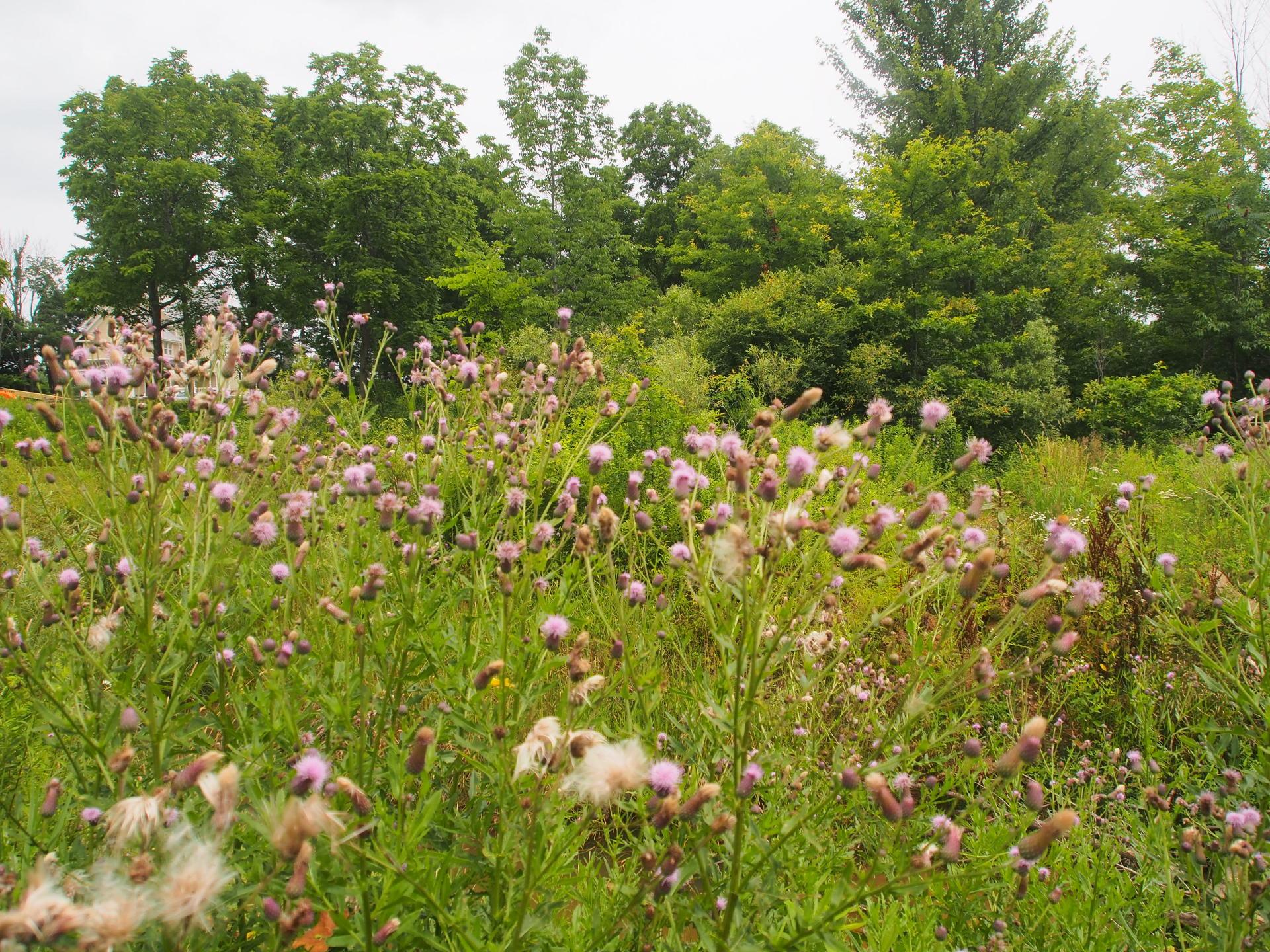 Wildflowers flowering in the fields