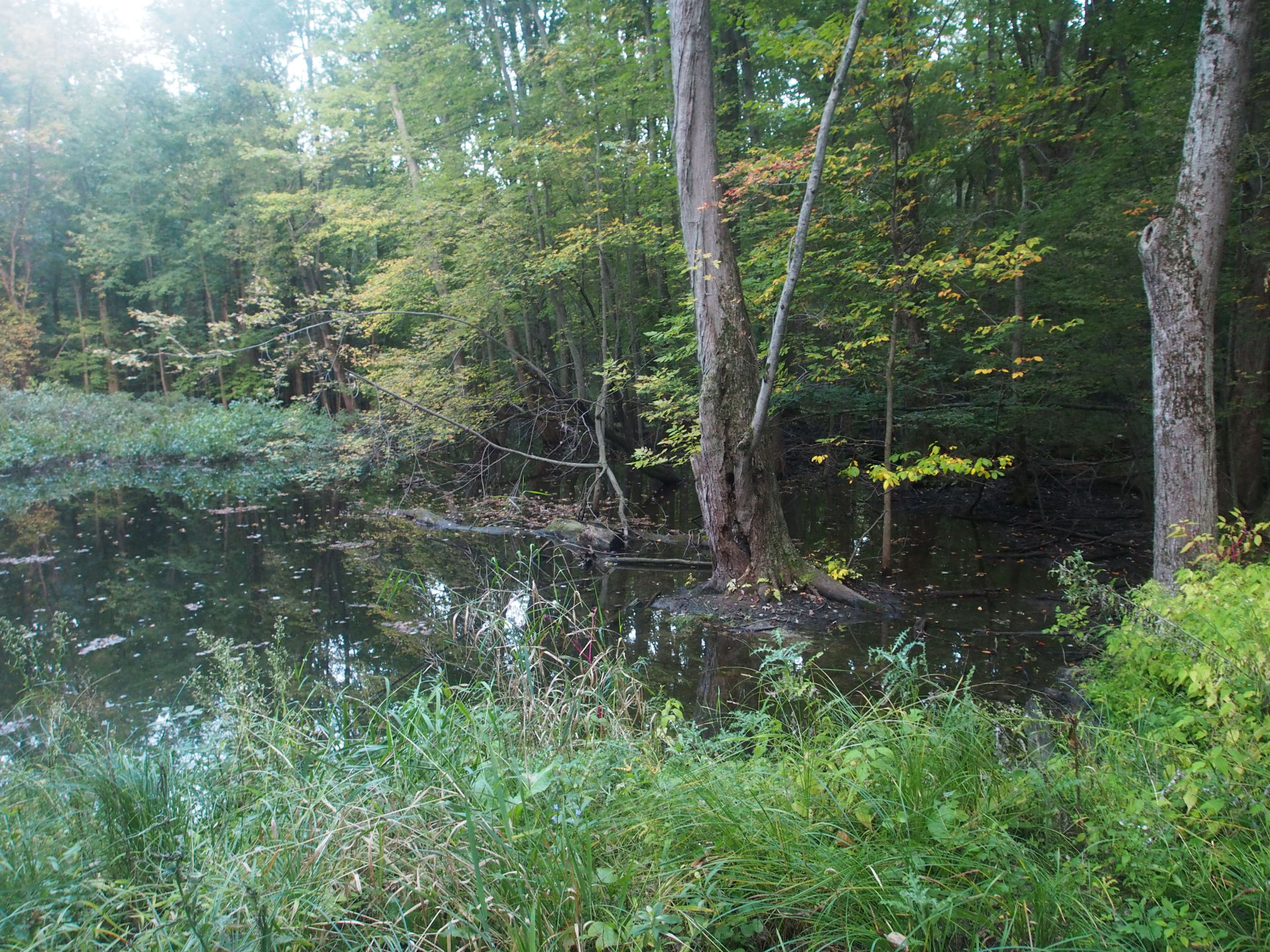 Wetlands in the woods